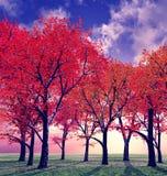 De mooie herfst Royalty-vrije Stock Foto's