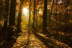 De mooie Herfst Stock Foto