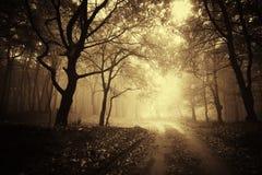 De mooie herfst in een gouden bos met mist stock afbeeldingen