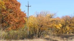 De mooie de herfst gele bomen in een bos de Herfstgebladerte valt aan de grond stock videobeelden