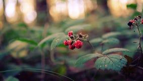 De mooie herfst in het bos royalty-vrije stock fotografie