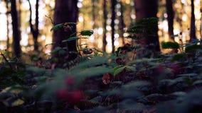 De mooie herfst in het bos royalty-vrije stock afbeelding