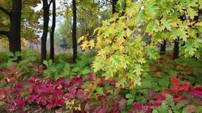 De mooie herfst in vergankelijk bos stock videobeelden