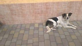 De mooie hond wacht op de eigenaar stock foto
