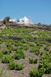 De mooie Huur van de Vakantie met wijngaarden Stock Fotografie