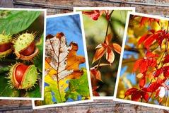 De mooie inzameling van de herfstbeelden Stock Afbeeldingen