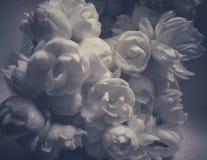 De mooie jasmijn komt beeld met een esthetische blik tot bloei royalty-vrije stock afbeelding