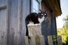 De mooie jonge zwart-witte kat zit op houten post dichtbij houten dorpshuis Royalty-vrije Stock Fotografie