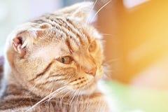 De mooie kat bekijkt camera, zachte nadruk Stock Foto's