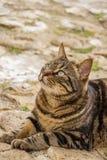 De mooie kat die van de gestreepte katstraat, bij St Julian ` s, Malta ter plaatse liggen Stock Afbeelding