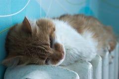 De mooie kat ligt op batterij bij ruimte Royalty-vrije Stock Foto