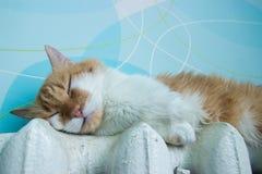De mooie kat ligt op batterij bij ruimte Stock Fotografie