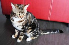 De mooie kat is op de vloer Stock Fotografie