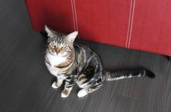 De mooie kat is op de vloer Royalty-vrije Stock Foto's