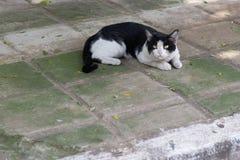 De mooie kat op het rusten op de vloer royalty-vrije stock afbeelding