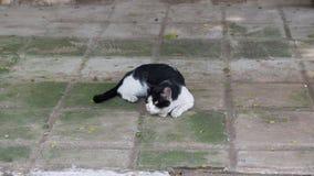 De mooie kat op het rusten op de vloer royalty-vrije stock afbeeldingen