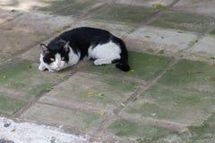 De mooie kat op het rusten op de vloer stock afbeelding