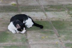 De mooie kat op het rusten op de vloer stock fotografie