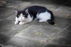De mooie kat op het rusten op de vloer stock afbeeldingen