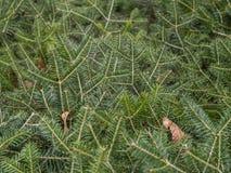 De mooie Kerstboom glanst in de zon in het bos royalty-vrije stock afbeelding