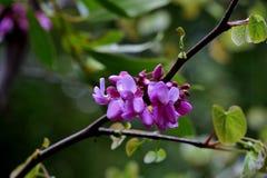 De mooie kleine roze bloemen op dunne takken sluiten omhoog royalty-vrije stock fotografie
