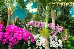 De mooie kleurrijke orchideeën versieren het exotische park onder blauwe hemel Royalty-vrije Stock Afbeeldingen