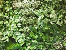 De mooie kunstmatige achtergrond en de textuur van de groene installatiemuur Royalty-vrije Stock Foto's