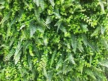 De mooie kunstmatige achtergrond en de textuur van de groene installatiemuur Royalty-vrije Stock Foto