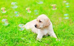 De mooie Labrador van het hondpuppy met zeepbels ligt op gras Stock Foto's