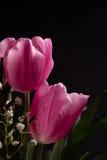De mooie Lente Stock Foto's