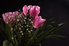De mooie Lente Royalty-vrije Stock Foto's
