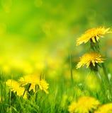 De mooie lente bloeit achtergrond Royalty-vrije Stock Foto's