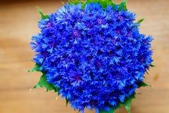 De mooie lente bloeit Blauwe Centaurea-cyanus op achtergrond Bl Royalty-vrije Stock Foto's