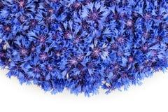 De mooie lente bloeit blauwe korenbloem op achtergrond Royalty-vrije Stock Afbeelding