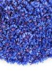De mooie lente bloeit blauwe korenbloem op achtergrond royalty-vrije stock afbeeldingen