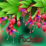 De mooie lente bloeit Fuchsia kaarten of uw ontwerp met ruimte voor tekst Vector Royalty-vrije Stock Afbeelding