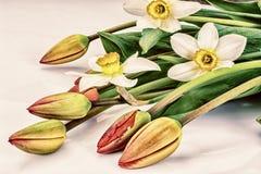 De mooie Lente bloeit Tulpen en Narcissen op Witte Backgroun Stock Afbeeldingen