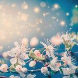 De mooie lente of de zomer die met bokeh en zon bloeien flakkert, bloemengrens stock fotografie