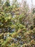 De mooie lichte van de de bladerenboom van het land natuurlijke groene achtergrond Stock Afbeeldingen