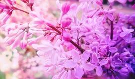 De mooie lilac close-up van het bloemontwerp op een regeling van de taklente royalty-vrije stock foto's