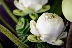 De mooie lotusbloembloem is het symbool royalty-vrije stock afbeelding