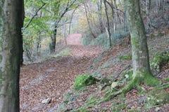 De mooie mening van de Herfstbomen over de bergen stock fotografie