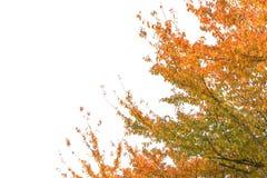 De mooie mening van de landschapsberg van Utsukushigahara-park is  Royalty-vrije Stock Afbeelding