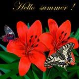 De mooie multicolored vlinders zitten op rode bloemen royalty-vrije illustratie