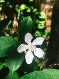 De mooie natuurlijke levensstijl van de bloemtuin Royalty-vrije Stock Afbeeldingen