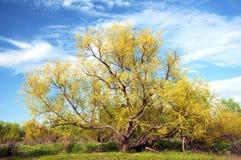 De mooie nieuwe groei op een boom in de lente Stock Foto's