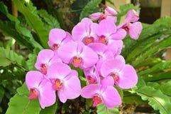 In de mooie orchideeën Royalty-vrije Stock Foto's