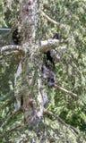 de mooie panda draagt binnen speel op bloemen en takken van bomen Stock Fotografie