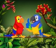 De mooie papegaaien spreken op de steel vector illustratie