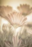 De bloemenachtergrond van de pastelkleur royalty-vrije stock fotografie